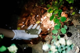Buurtbewoners vinden honderden pillen tussen de struiken in Cuijk