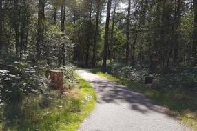 Overloon - Man (41) aangehouden voor zedenmisdrijf in Overloonse bossen