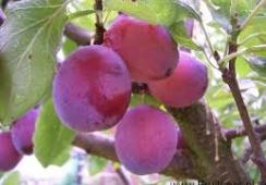 Foto's van Campagne groente en fruit