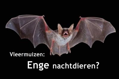 Evenement: Vleermuizen: enge nachtdieren?