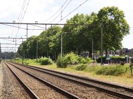 Koeien op het spoor bij Holthees, treinen rijden stapvoets om aanrijding te voorkomen